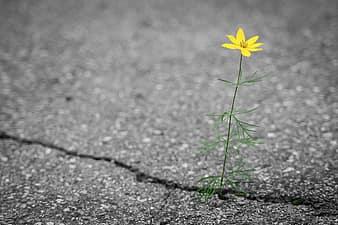 flower-in-concrete