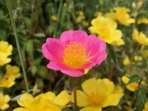 unique-flower